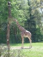 GiraffaFedi